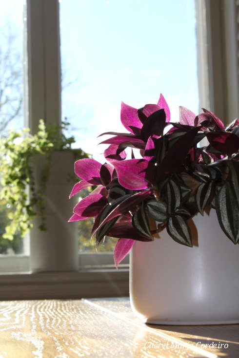 Jonsereds herrgård, pot plant, sunlight.
