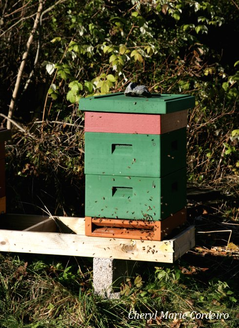 Jonsered nature reserve, bee keeping.