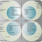 Systemic functional linguistics (SFL) in All Quadrants All Levels (AQAL) model